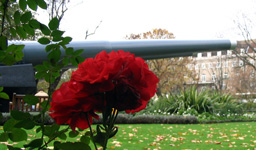 Red Flowers with Cannons in the Background